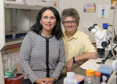 Sandra L. Rodriguez-Zas and Jonathan V. Sweedler are co-authors on a recently published paper that investigates the pathways involved in opioid-induced hyperalgesia.