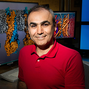 The researchers collaborated with the NIH Center for Macromolecular Modeling and Bioinformatics at the Beckman Institute, led by Emad Tajkhorshid, a professor of biochemistry, biophysics, and bioengineering.