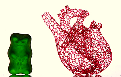 """Freeform 3D-Printed Heart Scaffold with Gummy Bear,"" by Matthew Gelber, working in the Bhargava Laboratory, was a finalist in the 2016 Science Image Challenge hosted by the School of Chemical Sciences. The macrophotograph shows a vascular template composed of 4,637 filaments, each individually"