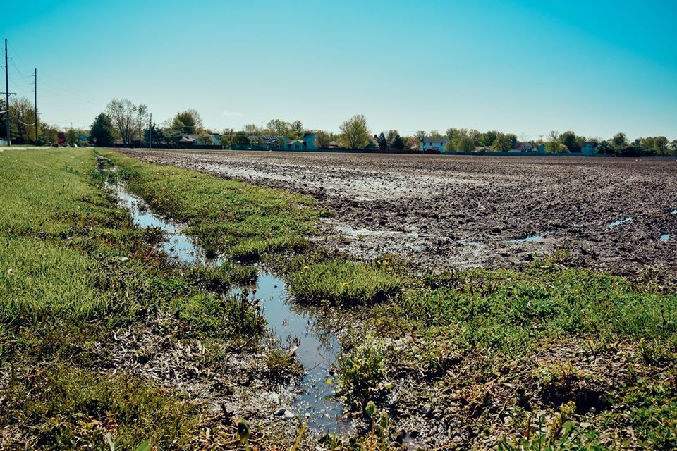 Rain has caused flooding in a field resulting in excess water running into ditches, carrying nutrients with it.