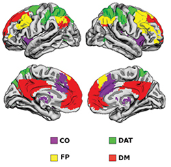 Regional networks as coded by color: cinguloopercular (CO), frontoparietal (FP), default mode (DM), and dorsal attention (DAT).