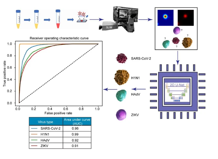 The AI discerned between four particles: SARS-CoV-2, H1N1, HAdV, and ZIKV. The preclinical trial resulted in a 96% success rate for SARS-CoV-2 detection and classification.