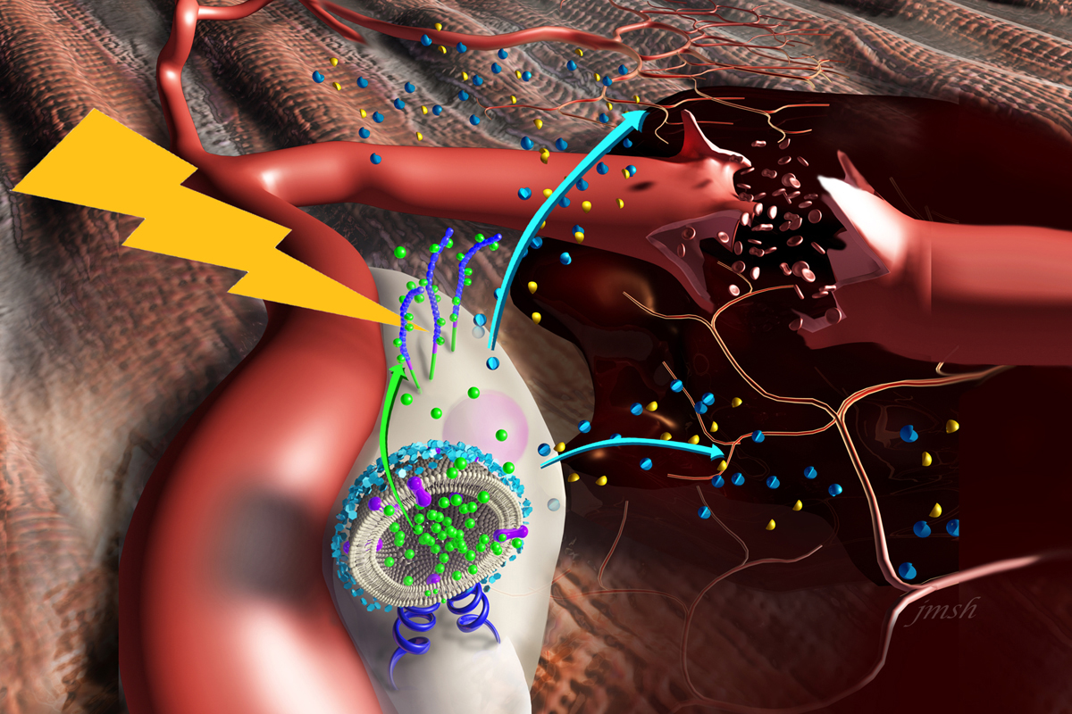 Graphic illustrating nanostimulators that bind to the surface of stem cells.