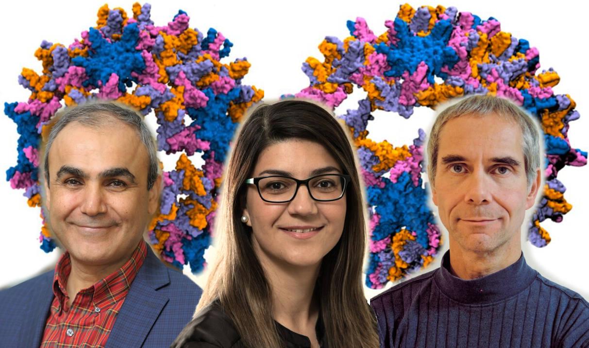 Emad Tajkorshid, Zhaleh Ghaemi, and Martin Gruebel.