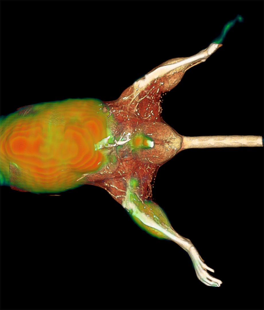 A PET image of hindlimb ischemia